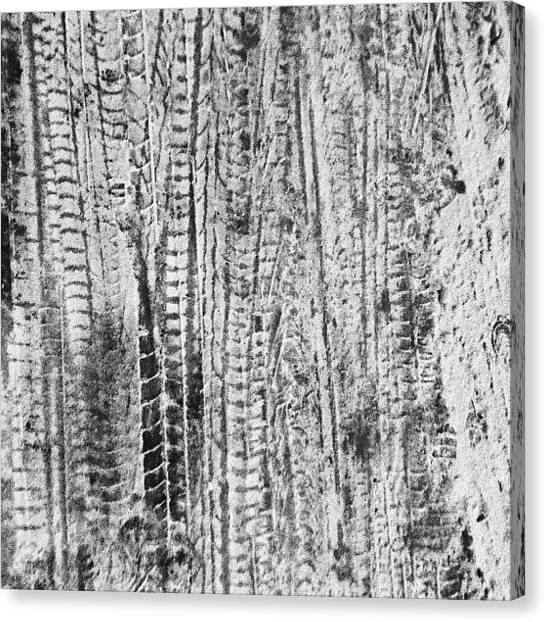 Texture Canvas Print - Snowy Tyre Tracks by Nic Squirrell