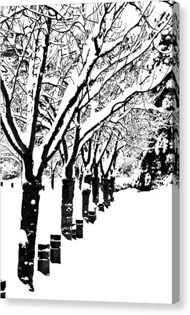 Snowy Walk Canvas Print