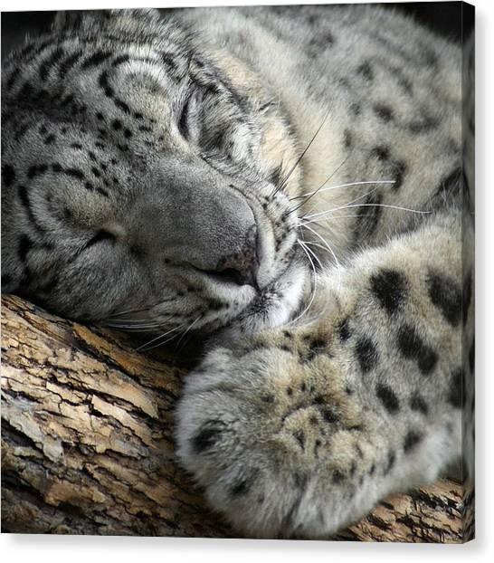 Snuggles Canvas Print