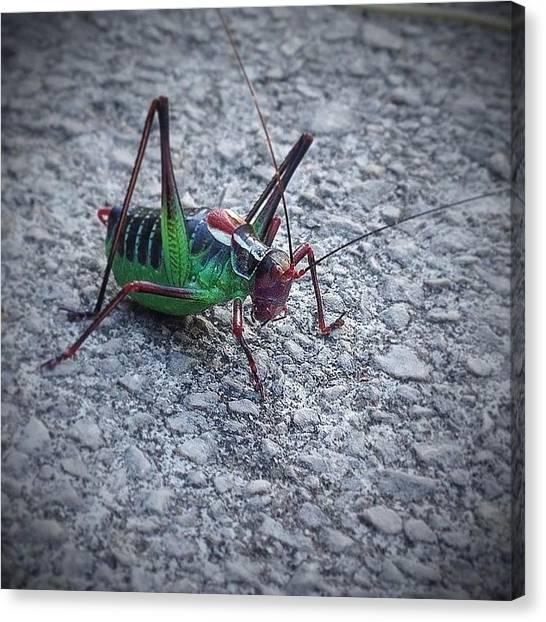 Grasshoppers Canvas Print - Snygg Kompis På Promenad #gräshoppa by Hans Thoursie