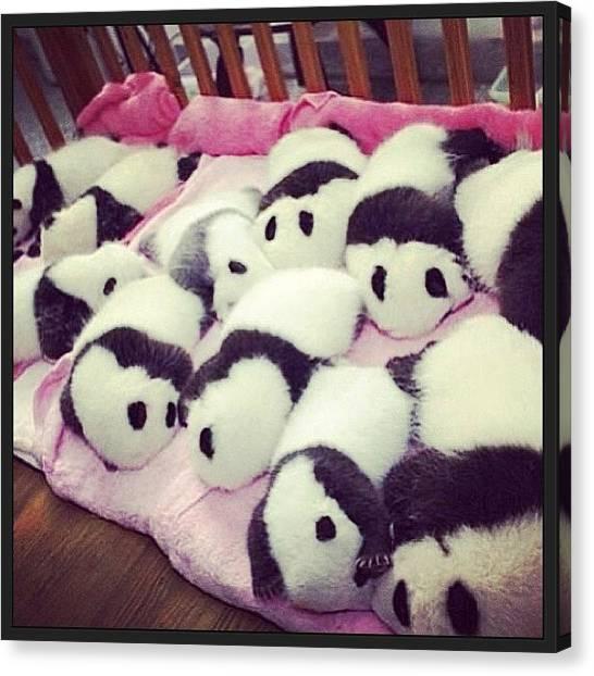 Panda Canvas Print - So Cute!!! #panda #cute #pets by May Pinky  ✨