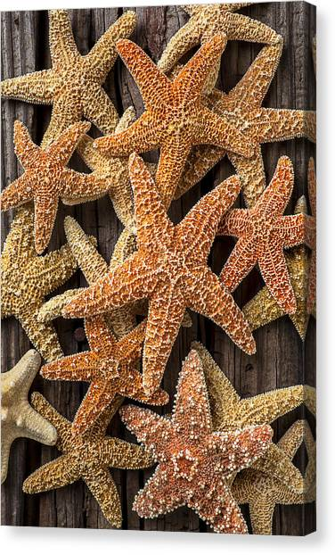 Starfish Canvas Print - So Many Starfish by Garry Gay