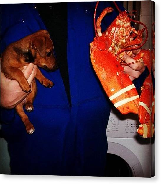 Lobster Canvas Print - So My Dog Was Small Once! Before It Got by Karl Giles