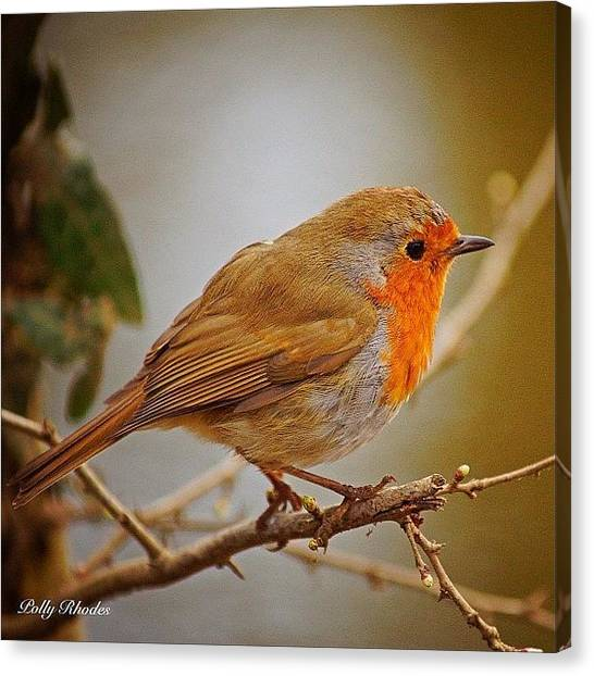 Robins Canvas Print - So There I Was Sitting On The Edge Of A by Polly Rhodes