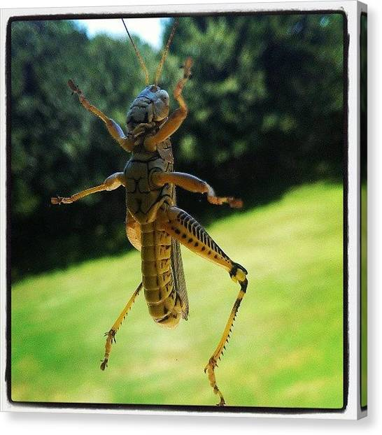 Grasshoppers Canvas Print - So There Is This Grasshopper On My by Lee Cox