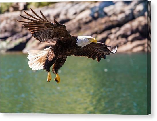 British Columbia Canvas Print - Soaring Eagle by Ian Stotesbury