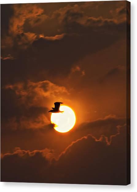 Soaring In The Sun Canvas Print by Tony Reddington