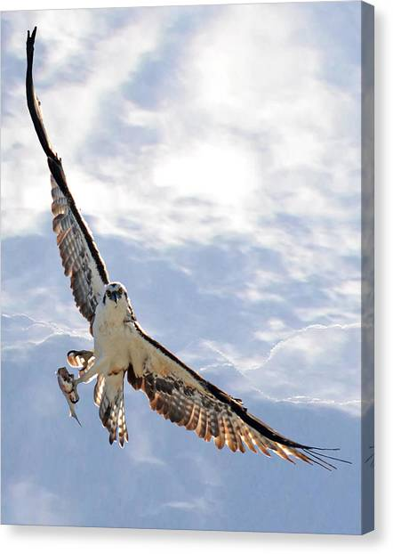 Soaring Canvas Print by Julie Cameron