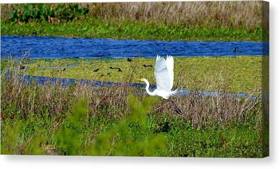Soaring Over The Rainbow Canvas Print