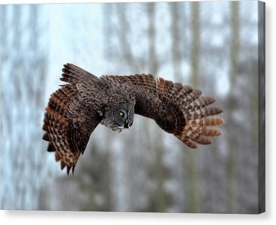 Alberta Canvas Print - Soaring by Peter Stahl