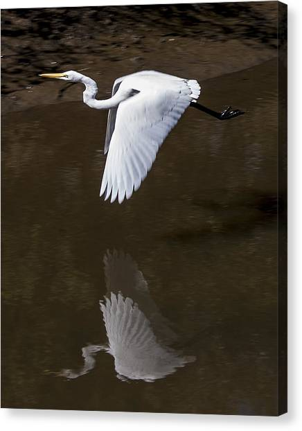 Soaring Reflection Canvas Print