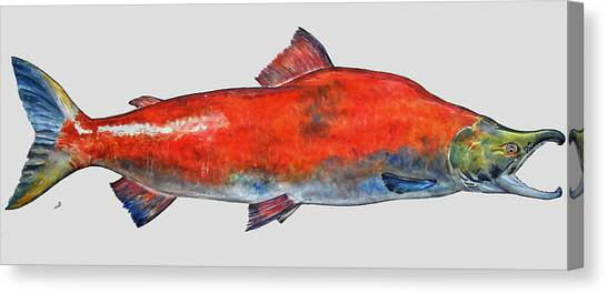 Salmon Canvas Print - Sockeye Salmon by Juan  Bosco