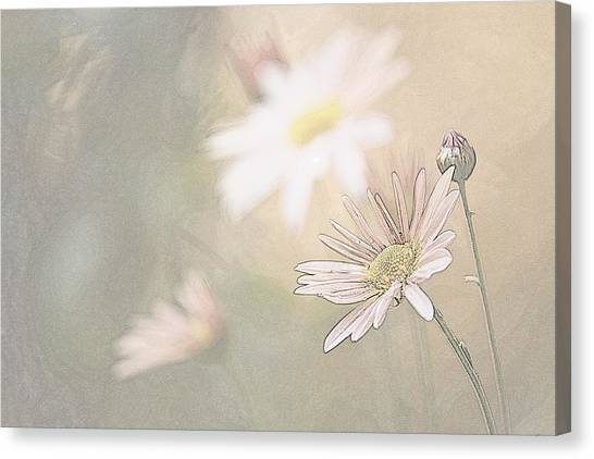Soft Aster Canvas Print