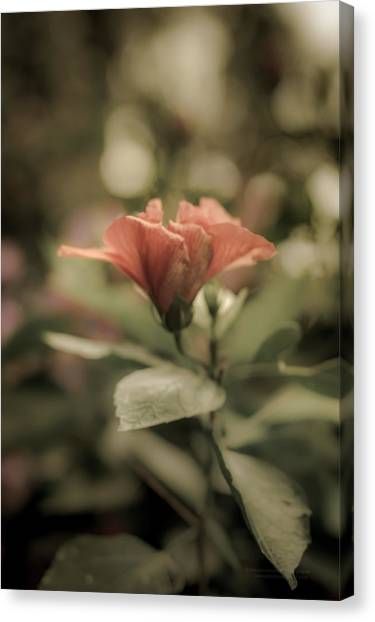 Soft Beauty Canvas Print
