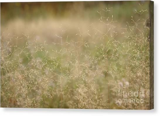 Soft Bent Grass Canvas Print by Jolanta Meskauskiene