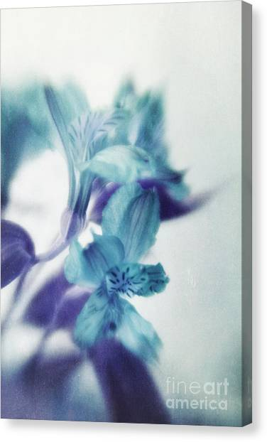 Peruvian Canvas Print - Soft Blues by Priska Wettstein