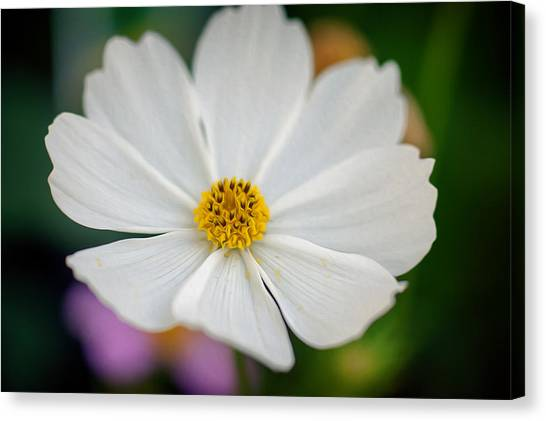 Soft Color Flower Art Canvas Print by Tammy Smith