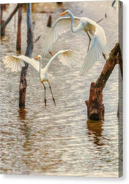 Soft Landing Two Egrets Canvas Print