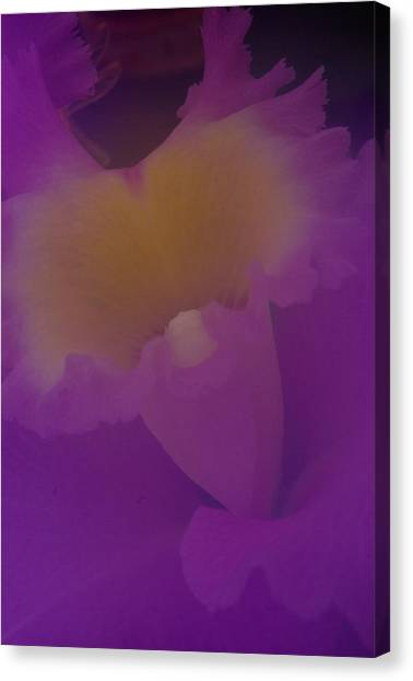 Soft Orchid Canvas Print