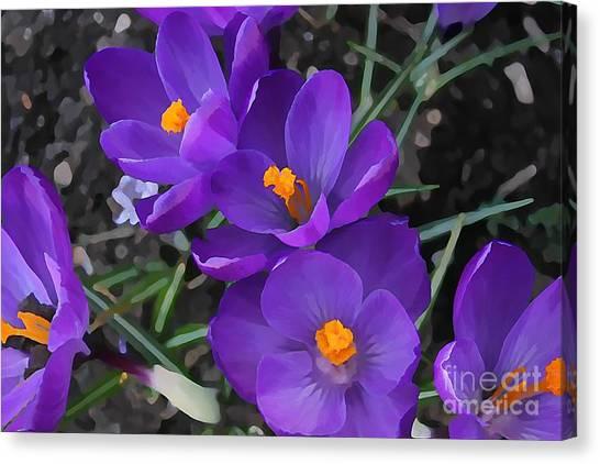 Soft Purple Crocus Canvas Print
