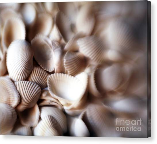 Soft Shells Canvas Print