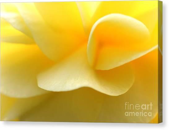 Soft Yellow Canvas Print