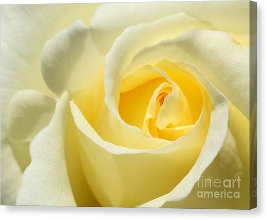 Soft Yellow Rose Canvas Print