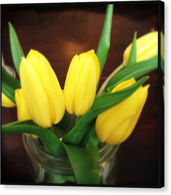 Tulips Canvas Print - Soft Yellow Tulips by Matthias Hauser