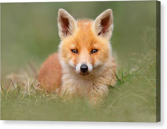 Camouflage Canvas Print - Softfox -young Fox Kit Lying In The Grass by Roeselien Raimond