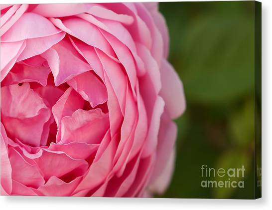 Softly I Unfold Canvas Print