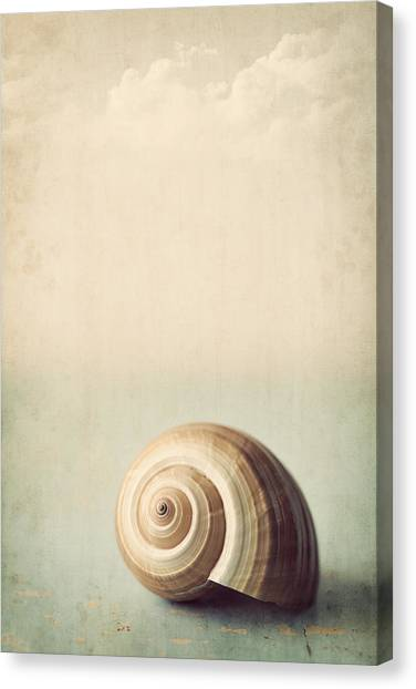 Conch Shells Canvas Print - Sojourn by Amy Weiss