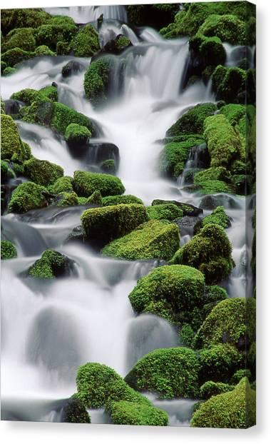 Sol Duc Stream Canvas Print