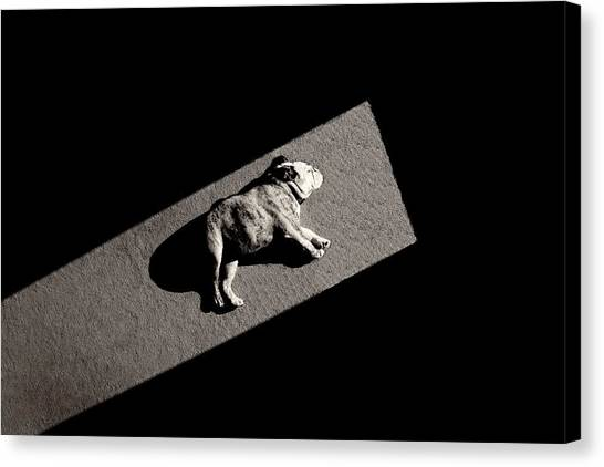 Puppies Canvas Print - Solar Non-powered by Mike Melnotte