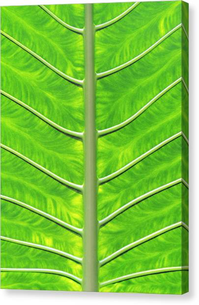 Solar Panel Leaf Veins Canvas Print