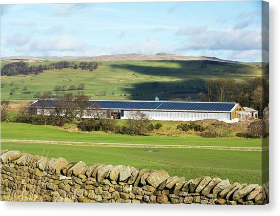 Solar Farms Canvas Print - Solar Panels On Cattle Shed by Ashley Cooper/science Photo Library