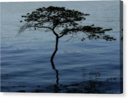 Solitaire Tree Canvas Print