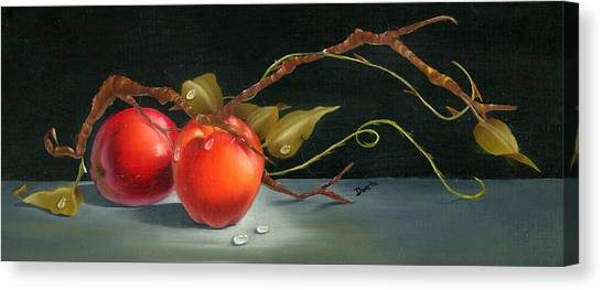 Solitary Apples Canvas Print