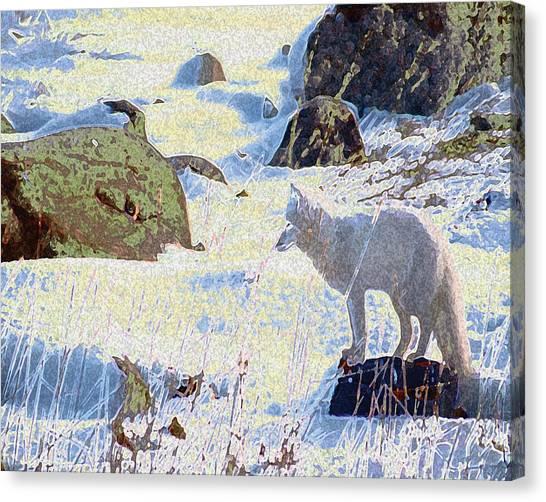 Solitary Fox Canvas Print