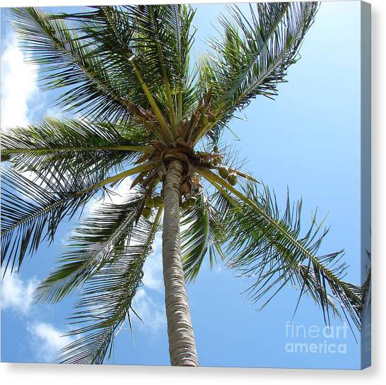 Solitary Palm Canvas Print