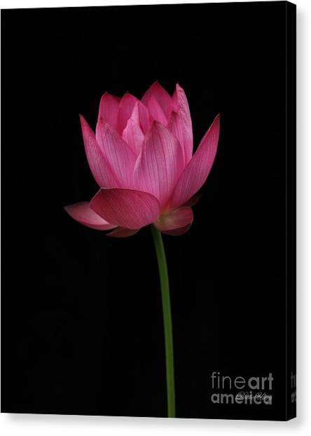 Red Lotus Canvas Print by Dodie Ulery