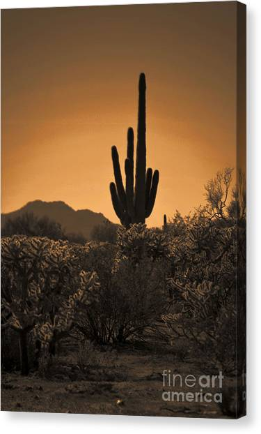 Solitary Saguaro Canvas Print