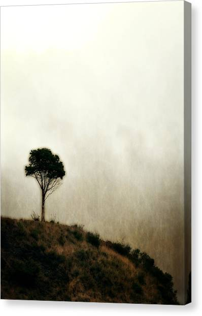 Solitary Tree Canvas Print