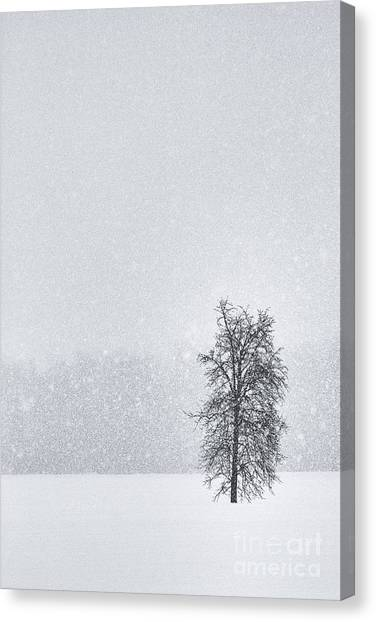 Solitude II Canvas Print
