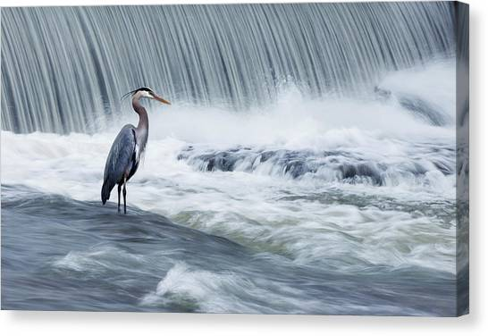 Heron Canvas Print - Solitude In Stormy Waters by Mircea Costina