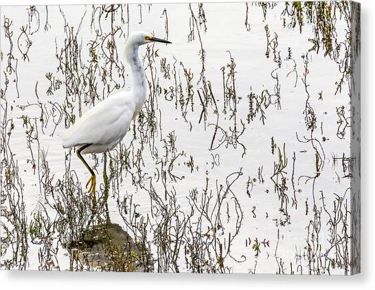 Canvas Print featuring the photograph Solitude by Kate Brown