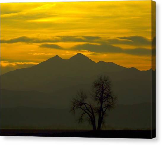 Solo Tree With Longs Peak Canvas Print by Rebecca Adams