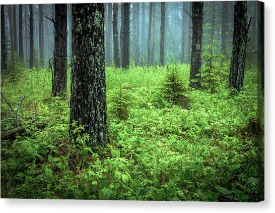 Canvas Print - Whispering Woods by Mary Amerman