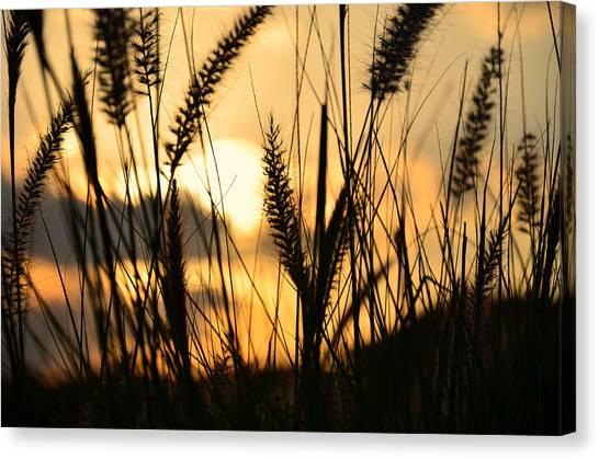 Seagrass Canvas Print - Solstice by Laura Fasulo