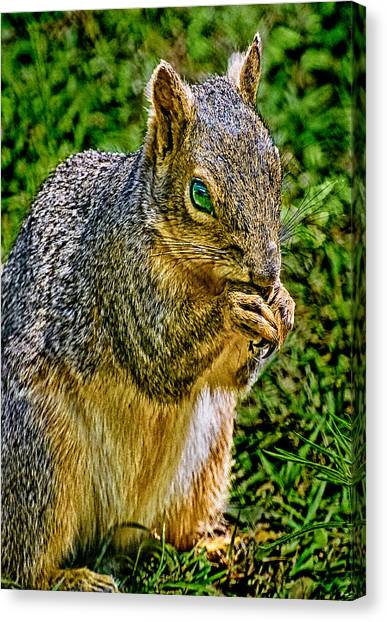 Some Squirrels Are Big Canvas Print