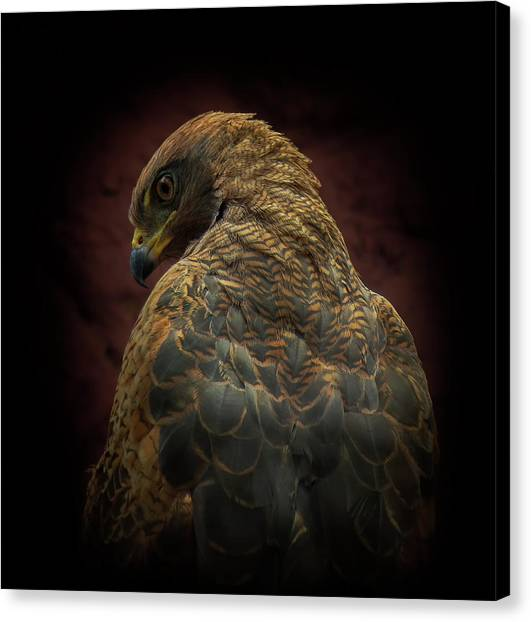 Hawks Canvas Print - Somebody Watch Me-savanna Hawk by Ferdinando Valverde